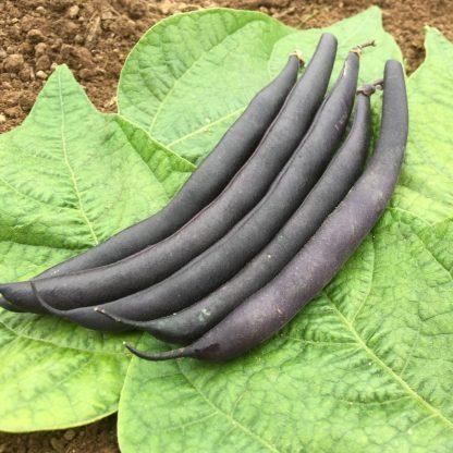 Bean - Purple Teepee