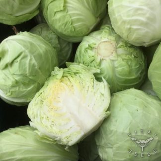 Cabbage - Derby Day