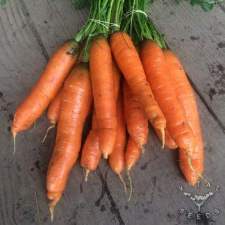 Carrot - Nantes 2