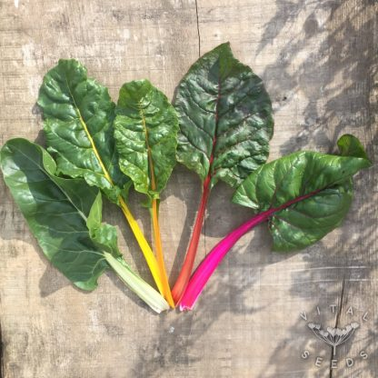 Chard - Five Colours 1