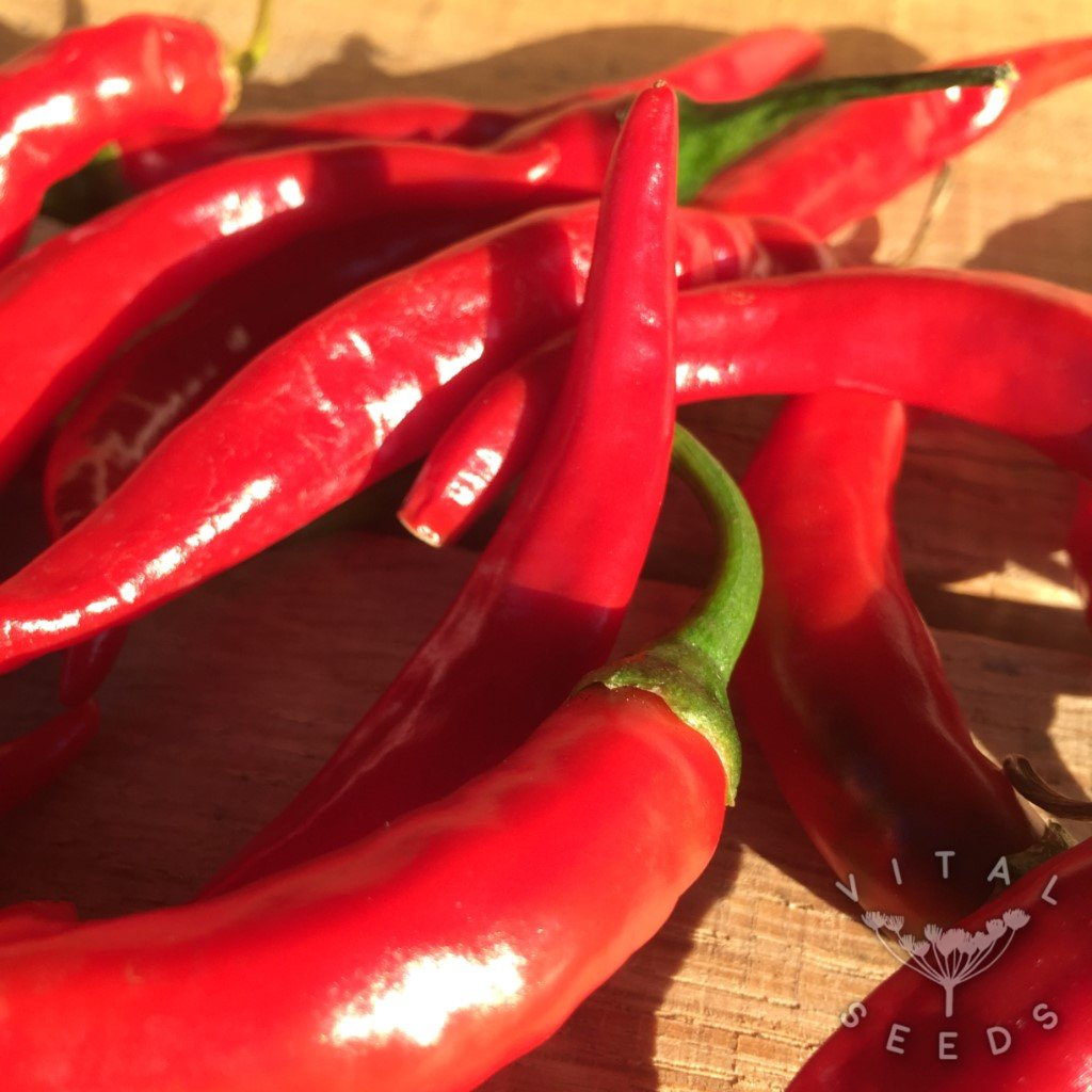 Chilli - Ring of Fire (Organic)