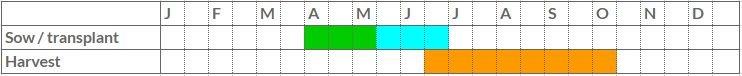 Courgette growing calendar