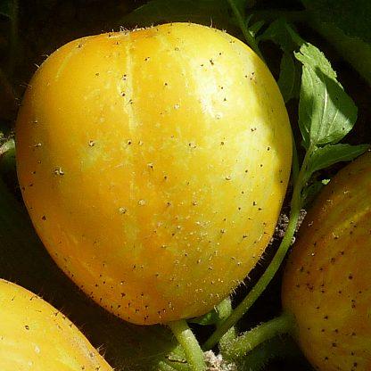 Cucumber - Crystal Lemon