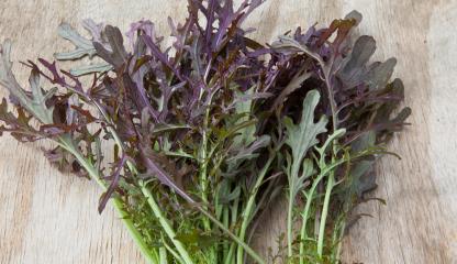 Purple Frills Oritental salad