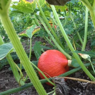 Squash and Pumpkin Seeds