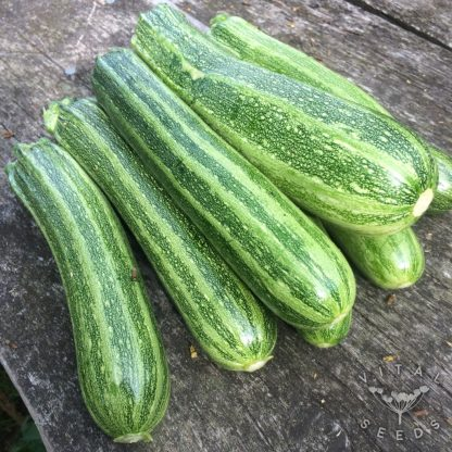 Courgette - Cocozelle