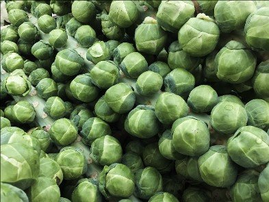 Brussels Sprouts Seeds