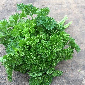 Organic herb seeds