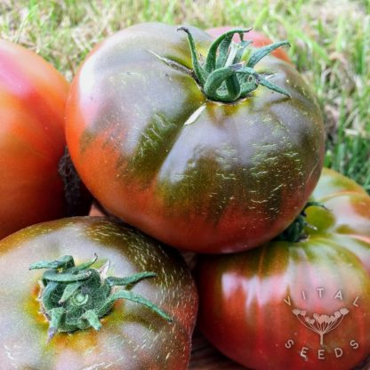 Tomato - Paul Robeson
