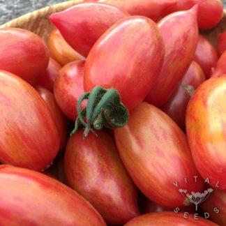 Tomato - Pink Tiger