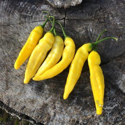 lemon drop chilli
